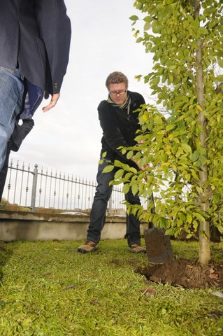 Tree planting at the birthplace of Dave Gallaher, Ramelton, Co. Donegal, Ireland. Nov. 2012. (courtesy Jon Smeaton)